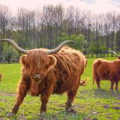 Curieuse Highland