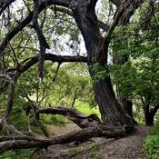 Le sentier passe sous l'arbre