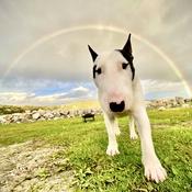 Richie under the Rainbow
