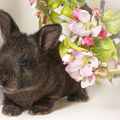 Bébé lapin noir