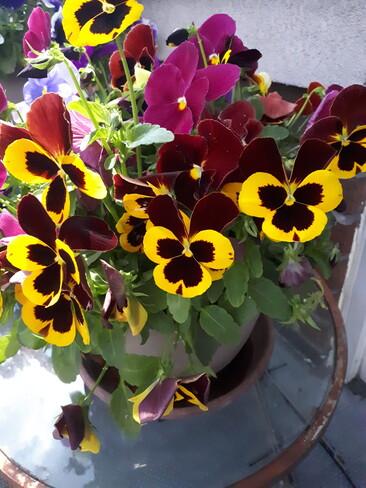 fleurs François-Perrault, QC