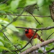 oiseaux Kanata