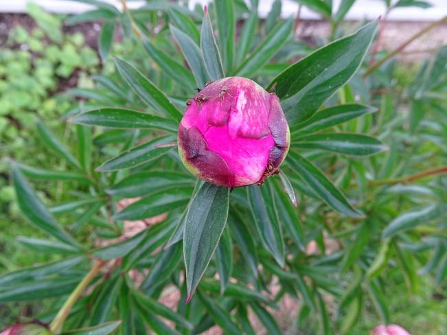 My Yard Flower Pics Sudbury, ON