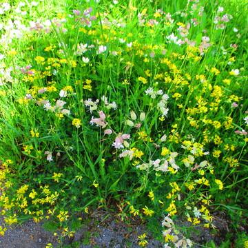 Wildflowers & A Bee, Kilmarnock, Ontario