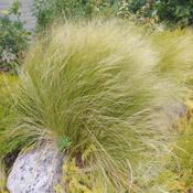 Wind in the bush