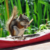 Reddie heads out in the canoe..