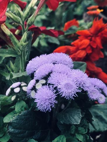 Some nice flowers Ontario