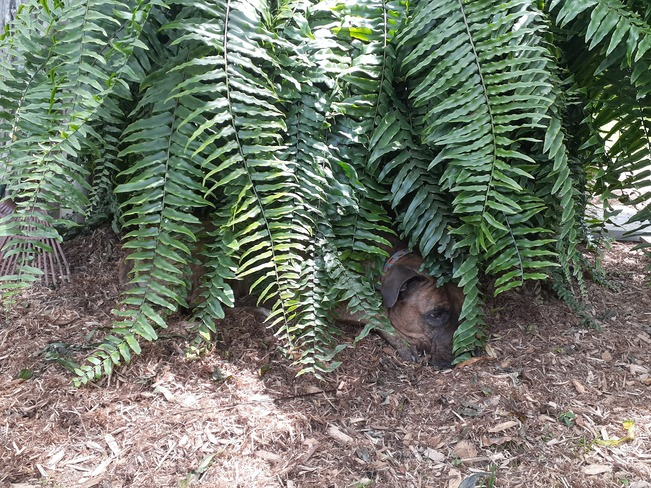 i am one with the fern Rigaud, QC