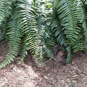 i am one with the fern