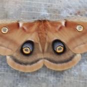 Papillon spectaculaire