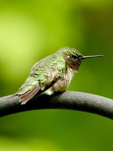 Birds Huntsville, ON