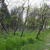 Cudia Park