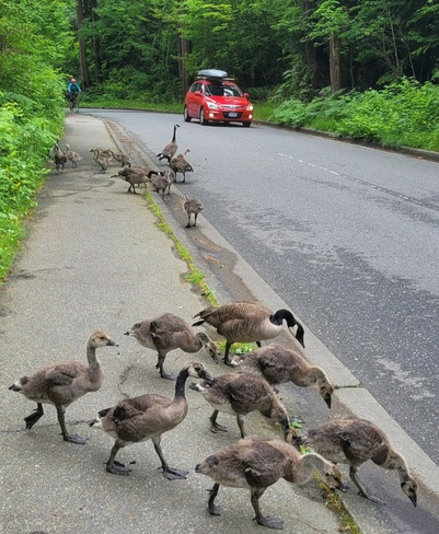 Traffic Stoppers Stanley Park, BC