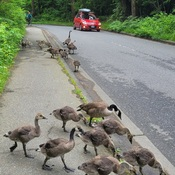 Traffic Stoppers