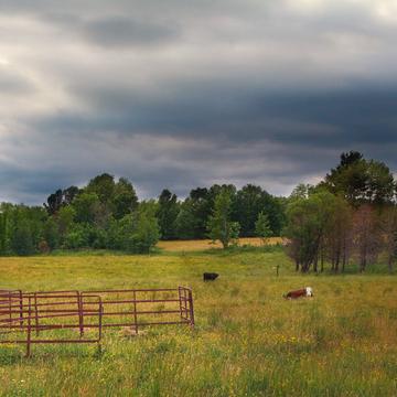 Vertes prairies