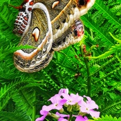 le plus gros papillon de nuit!