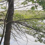 Trail near lake