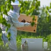 On prend soin de nos abeilles!