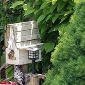 chipmunk set up home in bird house