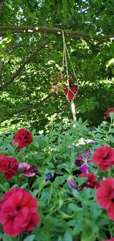 jardinières dans mon magnolias Saint-Bruno-de-Montarville, QC