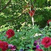 jardinières dans mon magnolias
