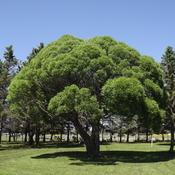 TROPICAL LOOKING TREE