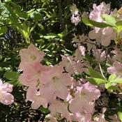 Matin fleuri à St-Roch-des- Aulnaies