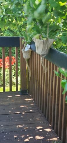 je pars une mode... jardinières dans mon arbre... Saint-Bruno-de-Montarville, QC