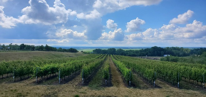 vignes Saint-Michel-de-Rougemont, QC