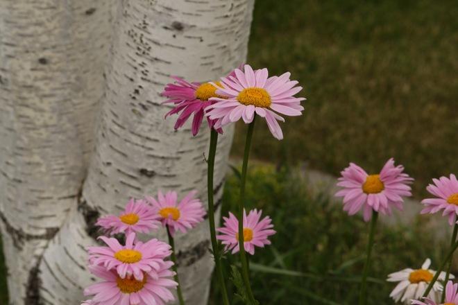 Flowers of Summer Saskatchewan Kindersley, SK