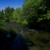Beauty Can Be So Simple [Waterford River]