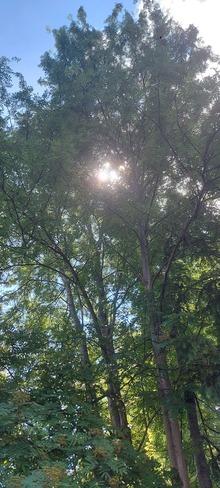 a travers les branches Pohénégamook, QC