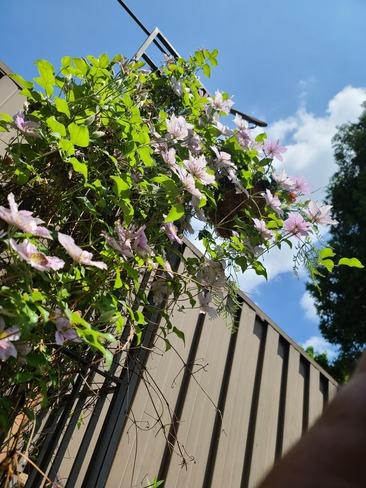 blooming nice Kitchener, ON