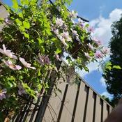 blooming nice