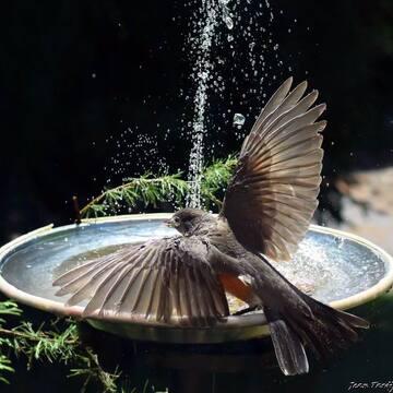 À la claire fontaine... m'en allant promener....