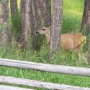 Deer Days of Summer 2021