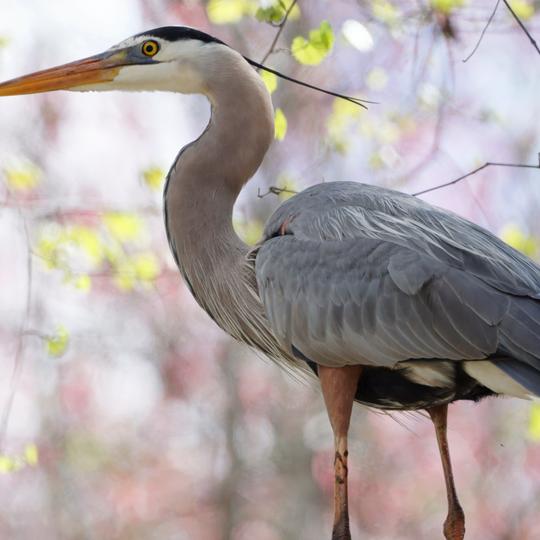 Pocosin Lakes wildlife refuge/Pongo lakes