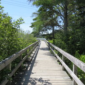 Boardwalk walking.
