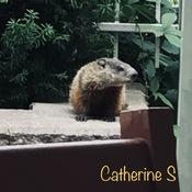 Condo Garden neighbours, The Groundhogs