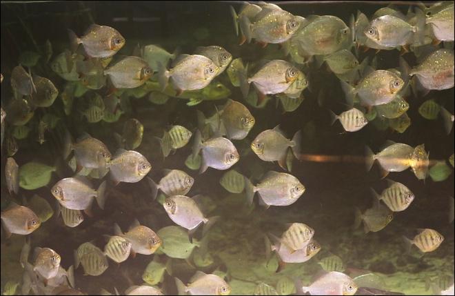 Quelque poisson Montréal, QC
