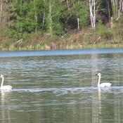 Sights seen proximal to Cowan River/Lake, SK