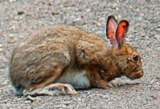 Wildlife near Thunder Bay Thunder Bay, ON