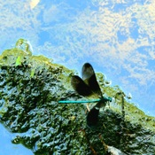 dragon fly planet