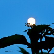 Jolie Lune .
