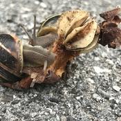 Escargots et cœur de pomme