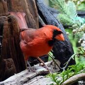Mon bel oiseau...