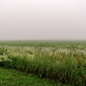 Dans le Brouillard .
