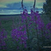 Photos de fleurs avant la pluie