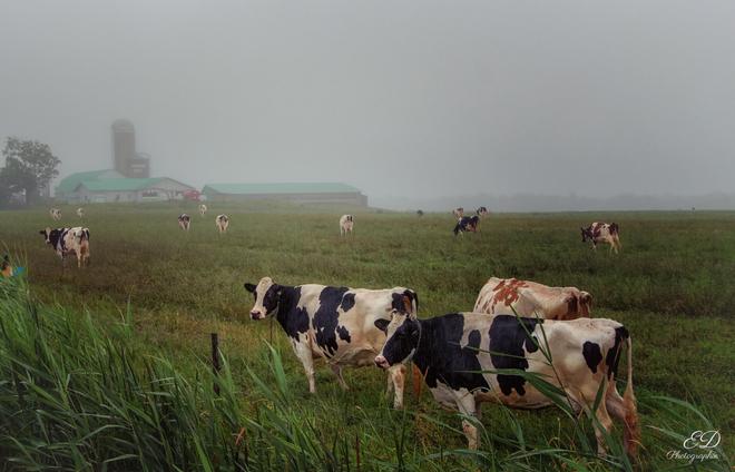 Brume sur la ferme Bromont, QC