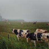 Brume sur la ferme